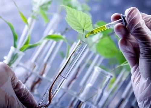 √Apa Itu Bioteknologi : Pengertian, Jenis, Manfaat, Dampak dan Contohnya