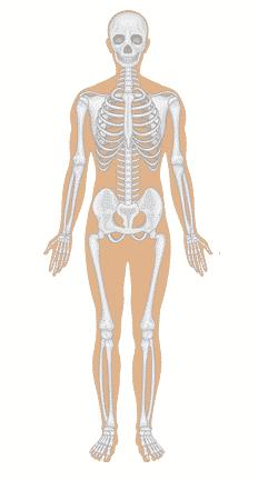 √Anatomi Tubuh Manusia : Pengertian, Struktur dan Penjelasanya