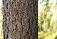 √Batang Tumbuhan : Pengertian, Fungsi, Struktur, Macam dan Fungsinya