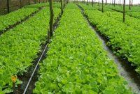 √ Manajemen Agribisnis : Pengertian, Ruang Lingkup, Aspek, Fungsi dan Contohnya