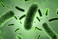 √ Jenis Bakteri : Pengertian, Peran, Struktur dan Cirinya