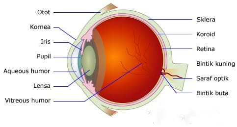 √ Alat Optik : Pengertian, Macam dan Fungsi