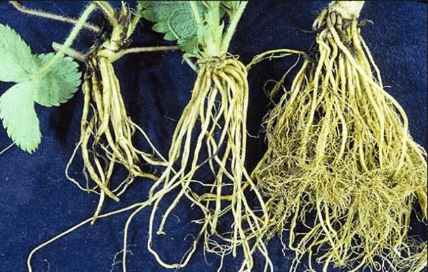 Hasil gambar untuk akar tumbuhan