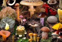 √ Ciri Fungi : Pengertian dan Klasifikasinya