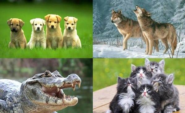 Hewan Karnivora Pengertian Ciri Habitat Dan Contohnya