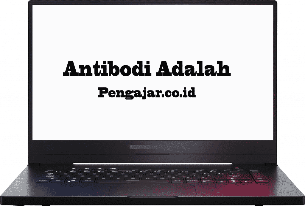 antibodi-adalah