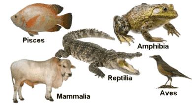 Hewan Vertebrata Adalah