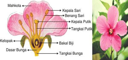 sturktur bunga
