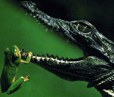 Amfibi dan Reptil