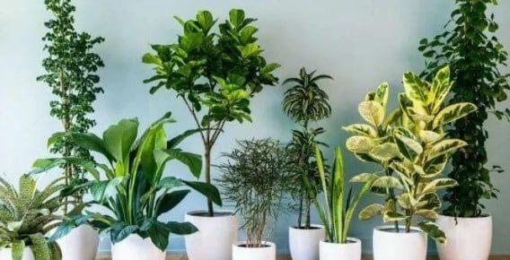Manfaat Tumbuhan untuk Makhluk Hidup