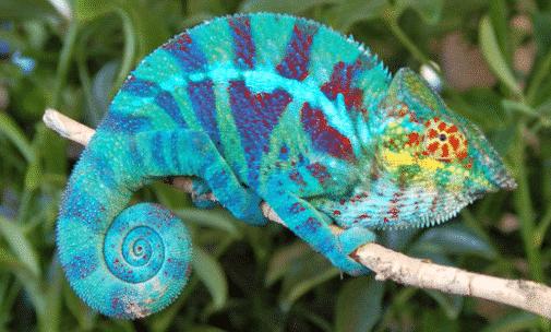 Pengertian Reptil Adalah